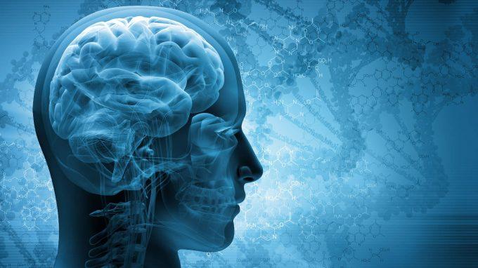 Sistema immunitario, cervello e comportamento