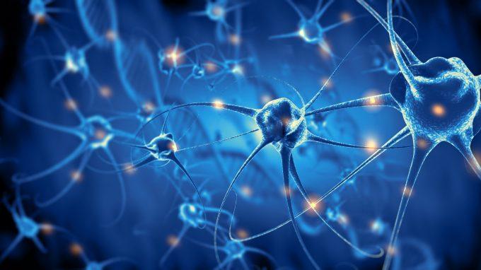 Svelato un altro mistero sul cervello, le spine dendritiche alla base dell'apprendimento