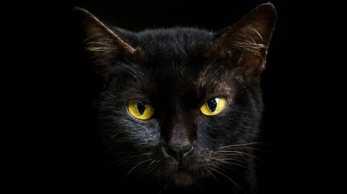 """""""Ai gatti neri porta sfortuna essere attraversati da un'auto"""": il bias del gatto nero (BCB)"""