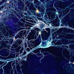 Connettoma: struttura e funzionamento della mente umana - Neuroscienze