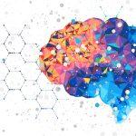 Controllo cognitivo: ruolo di corteccia prefrontale e funzioni esecutive
