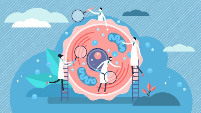 L'epigenetica e il mondo prenatale