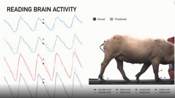 Neuralink e la realizzazione di impianti neuronali negli esseri viventi - IMM.1