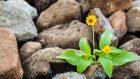 La resilienza: un piegarsi senza spezzarsi